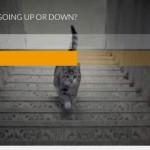 Tranh cãi cộng đồng mạng, con mèo đi lên hay đi xuống