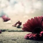 Đừng khiến mình đau! Có nhớ thì cũng chỉ nhớ để trong lòng..