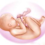 Video sự phát triển của thai nhi trong bụng mẹ