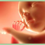 Sự phát triển của thai nhi theo tuần