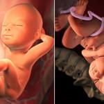 Kì diệu sự phát triển não bộ của thai nhi