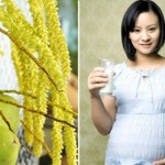 Mang thai 3 tháng cuối thai kỳ có nên uống nước dừa không?