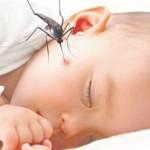 Bệnh sốt xuất huyết ở trẻ: Nguyên nhân, cách phòng tránh và chữa bệnh tốt nhất